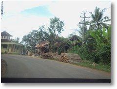 Jalur Saketi Hutan Gundul1