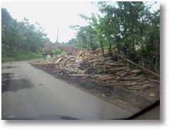 Jalur Saketi Hutan Gundul2