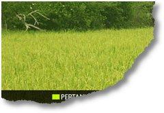 Pertanian Peternakan Banten